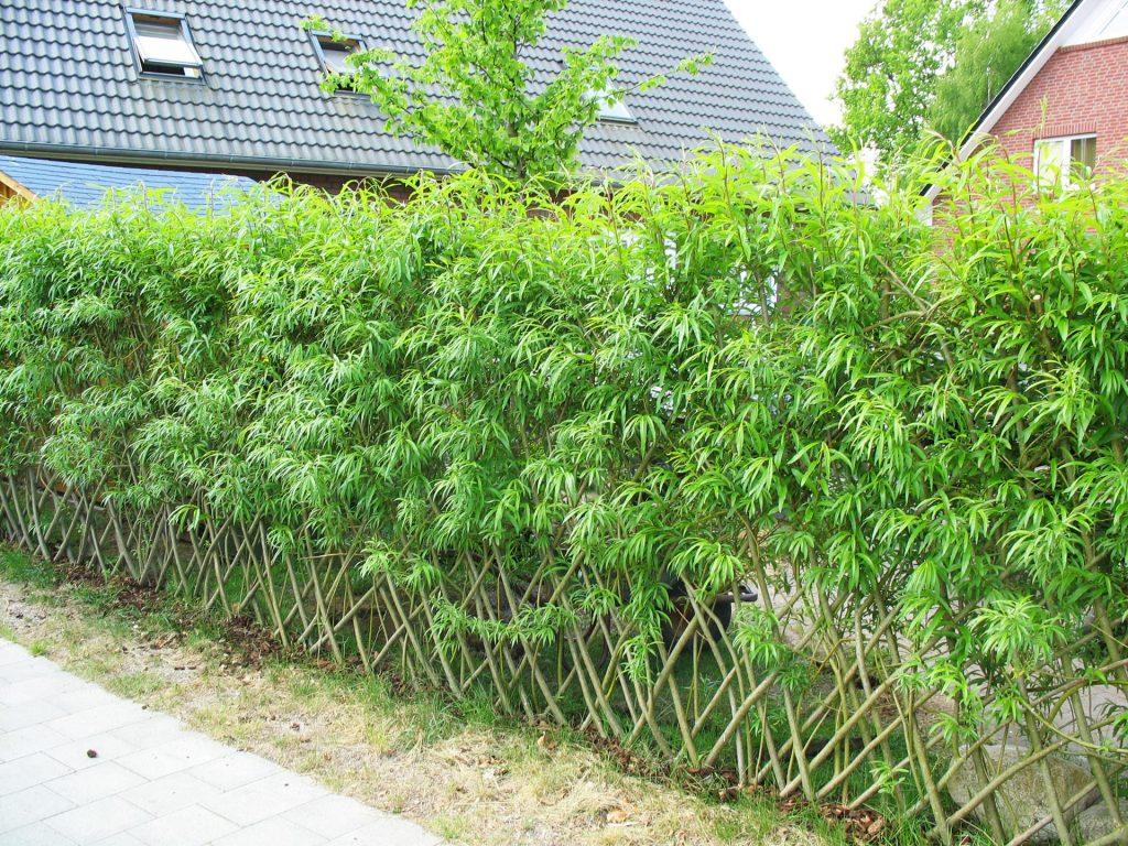 Sichtschutz Und Zaune Biotop